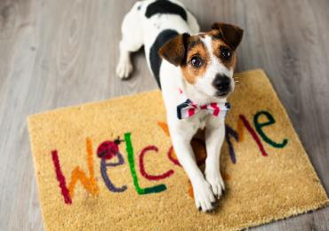 Como manter a boa convivência dos pets com a vizinhança